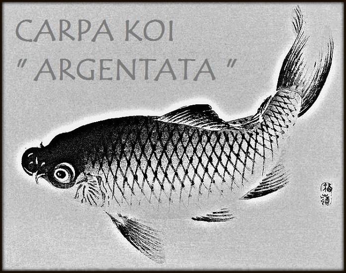 Carpa Argentata