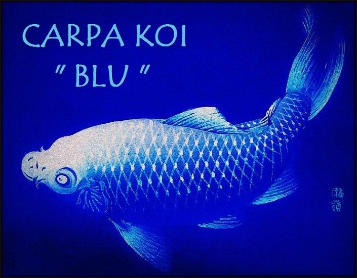 Carpa Blu