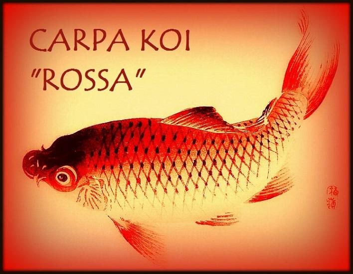 Carpa Rossa