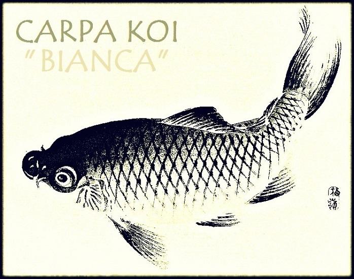 Carpa Bianca