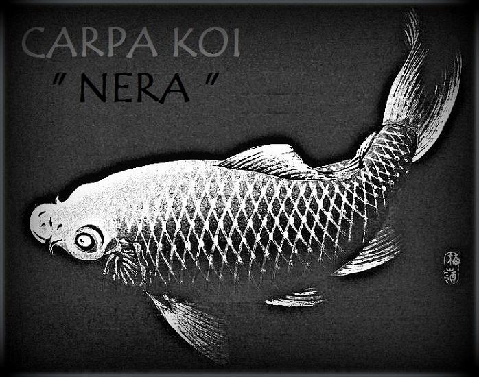 Carpa Nera